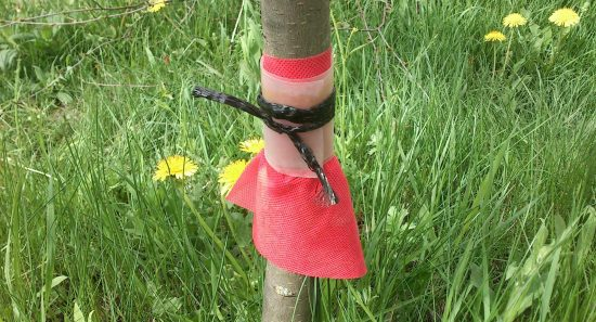 Как избавиться от муравьев и тли на деревьях - kak-izbavitsya-ot-muravev-na-derevyax-01-550x297