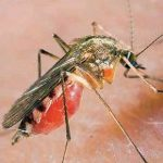 Отек после укуса комара